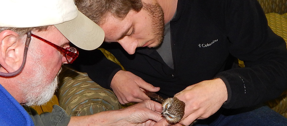 Biology professor Kim Smith and student Mitchell Pruitt examine a northern saw-whet owl caught Nov. 21, 2014, at Ozark Natural Science Center. Photo by Joe Neal.