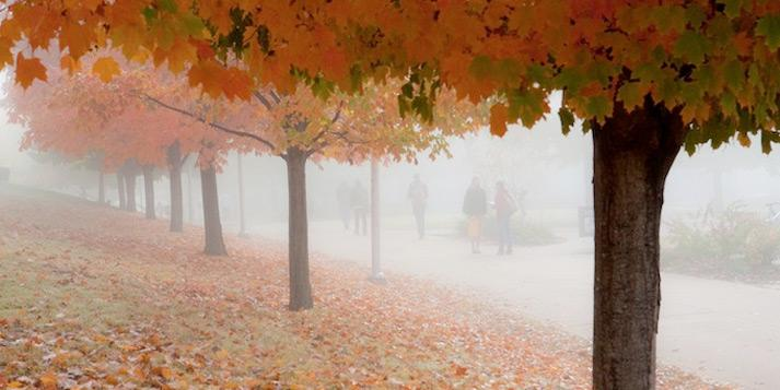 A foggy fall morning on the U of A campus.