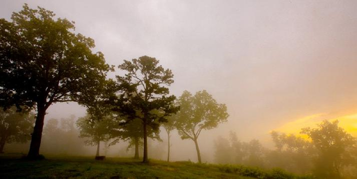 A foggy sunrise on a tree-covered Ozark hillside.
